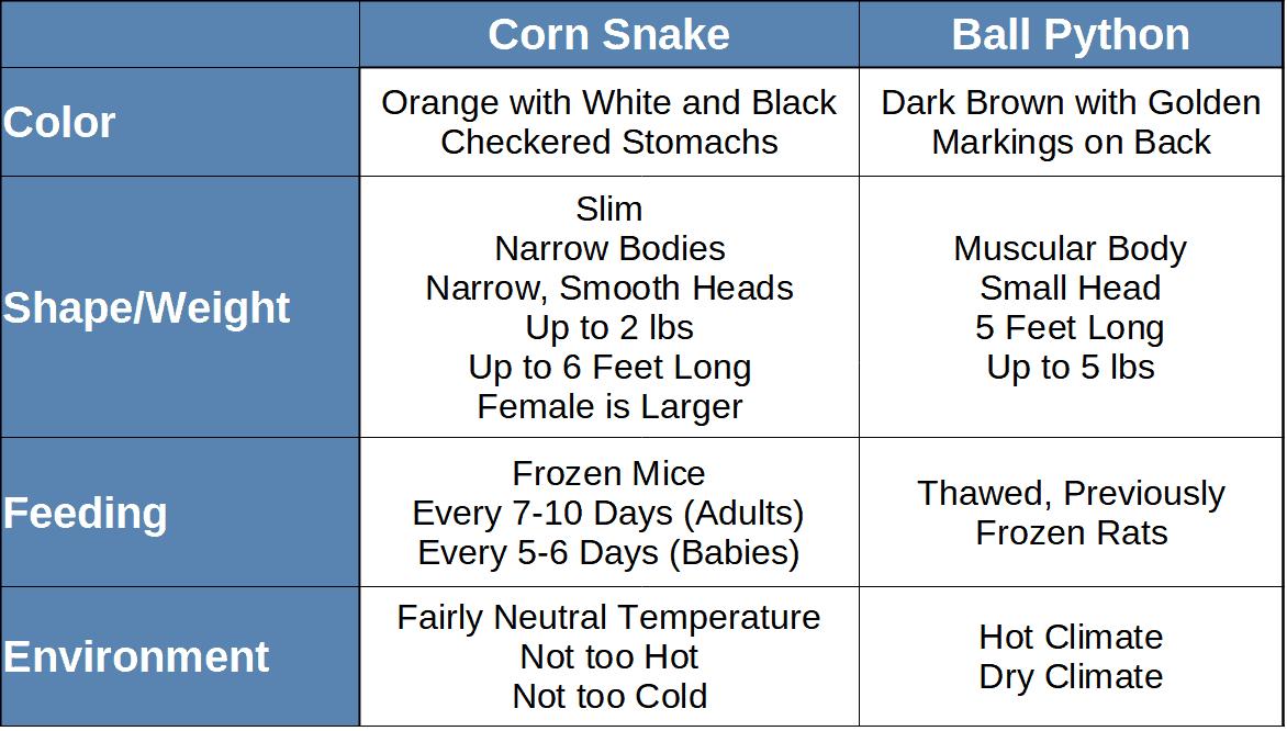 Corn snake vs ball python comparison table