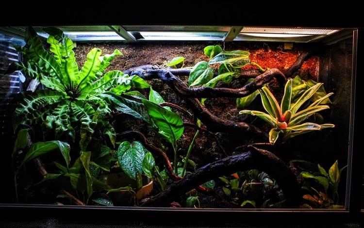 amazon tree boa setup