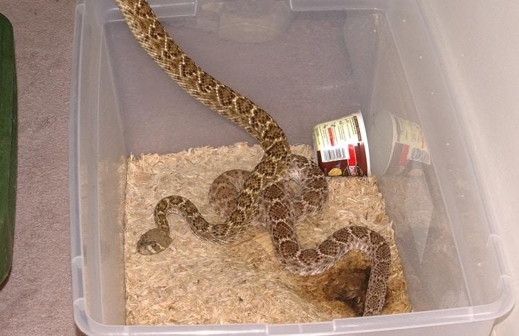 snakes in plastic rack