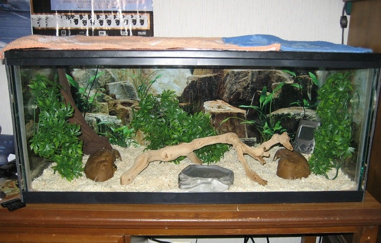 about ball python enclosure
