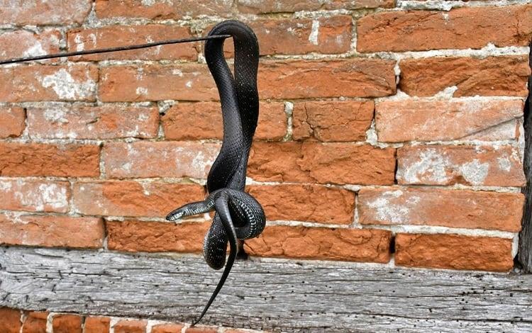 safely remove snake