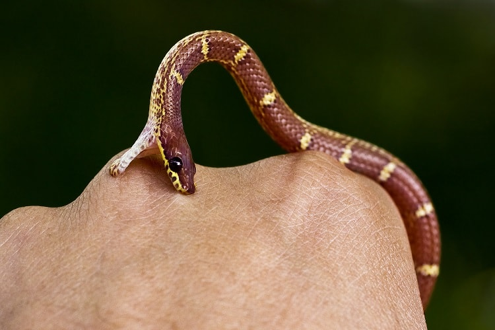 venomous snake biting