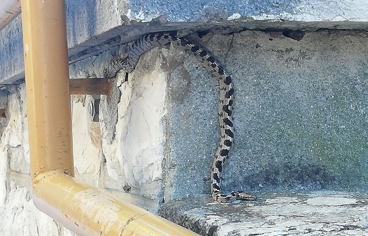 snake climbing on concrete wall