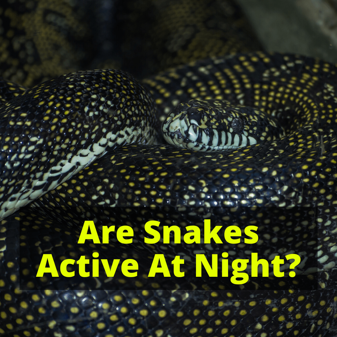 Are Snakes Active At Night