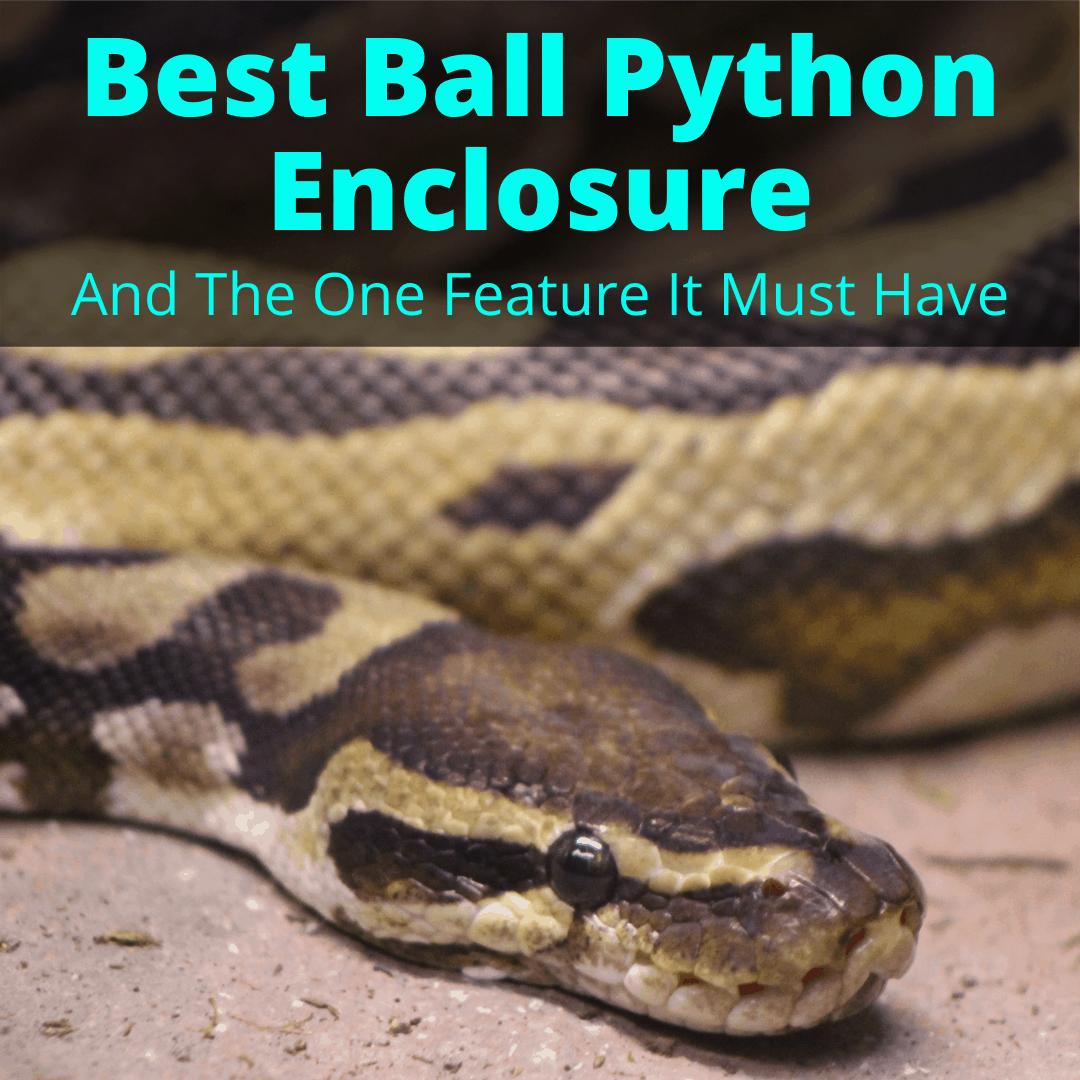Best Ball Python Enclosure