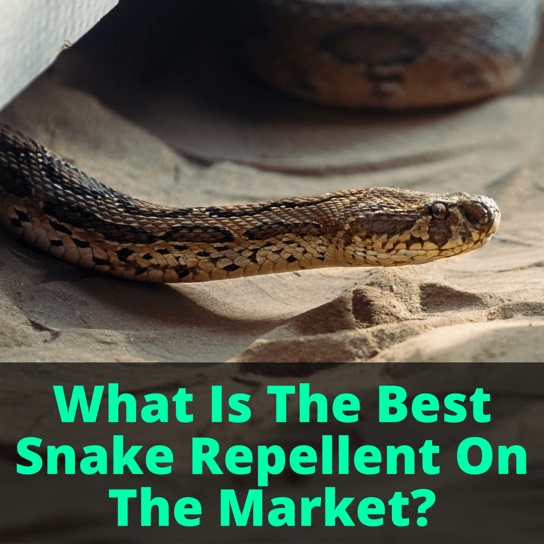 Best Snake Repellent On The Market