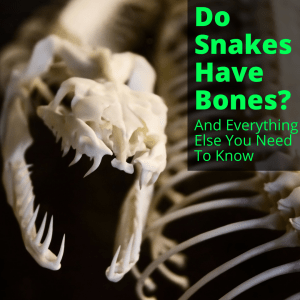 Do Snakes Have Bones