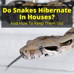 Do Snakes Hibernate In Houses
