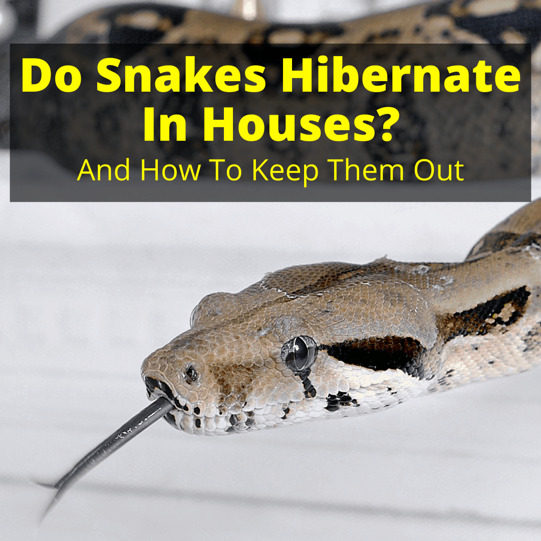 Do Snakes Hibernate In Houses