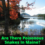 Are There Poisonous Snakes In Maine