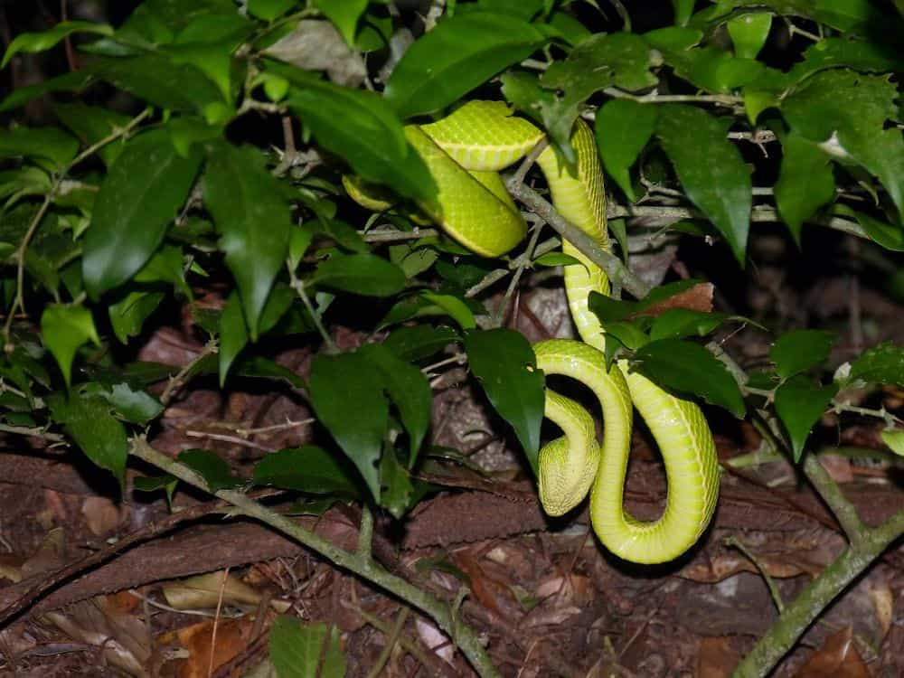 snake active at night