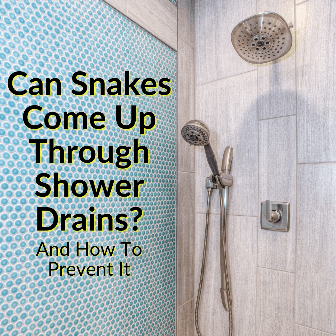 Can Snakes Come Up Through Shower Drains