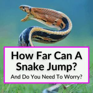 How Far Can A Snake Jump