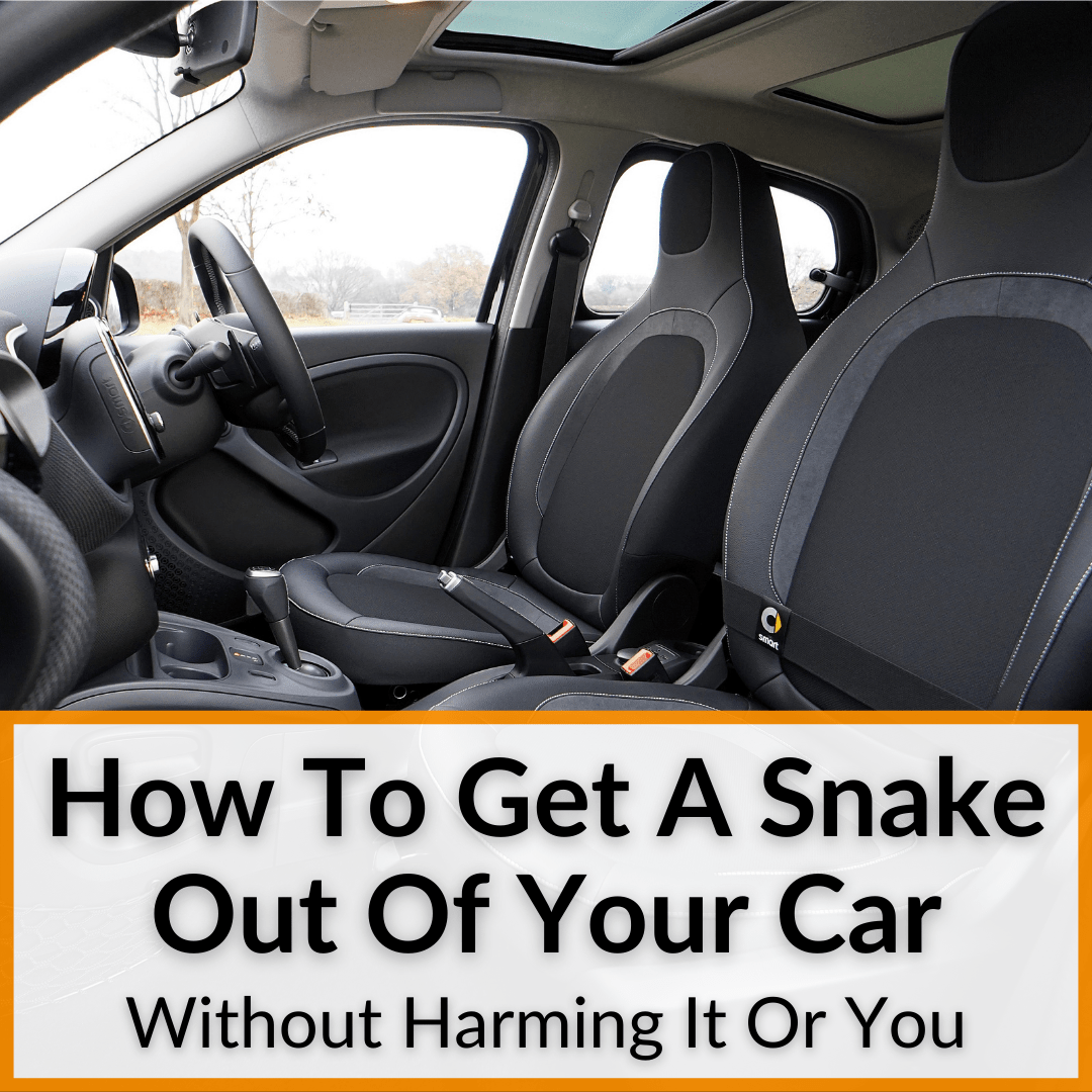 How To Get A Snake Out Of Your Car