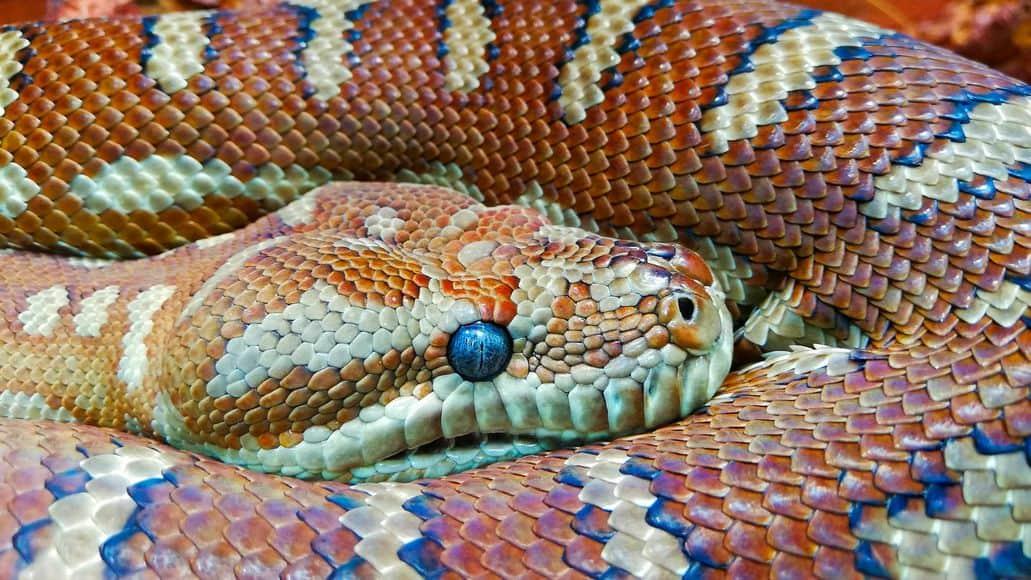 blue snake eye